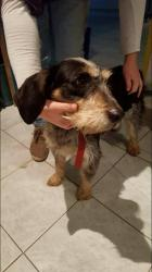 Chienne chasse martigues